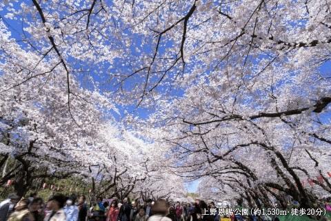 上野恩賜公園  約1,530m・徒歩20分
